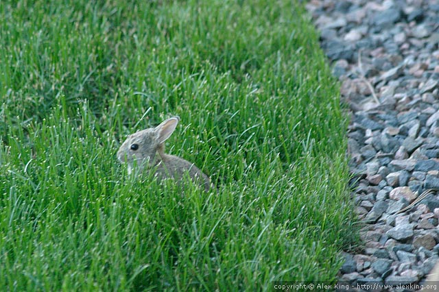 Very small rabbit