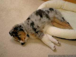 Bed, no bed, no matter.