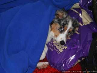 Sleeping under a blanket