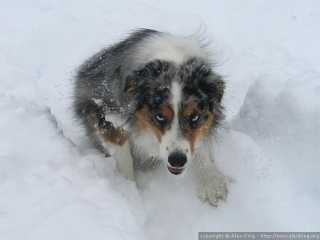 Struggling to climb a snow bank