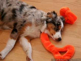 Sleeping on her prize toy