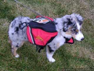 Future hiker