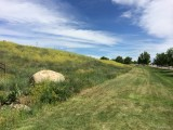 Native Grasses and Wild Flowers